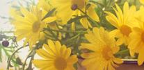 写真:花・植物