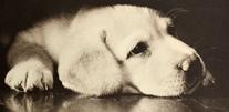 写真:動物